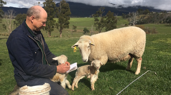 Performs recording: Palmerston Coopworth principal Bill Scott-Young ensures accurate records are kept for all breeding stock to give buyers confidence in their purchases